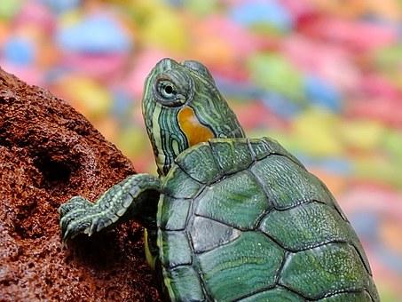 Urządzenie terrarium dla żółwia