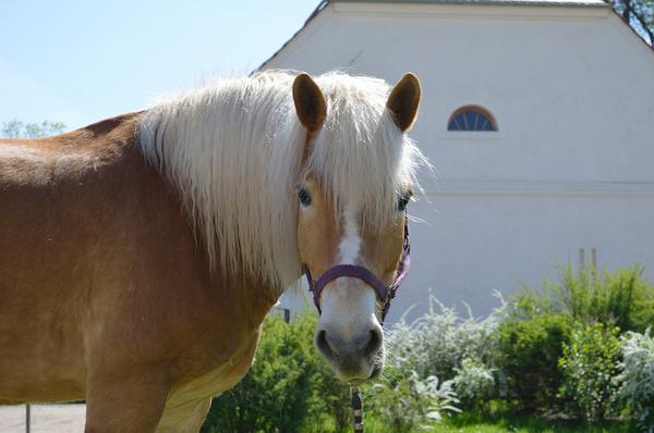 Odpowiednie żywienie konia
