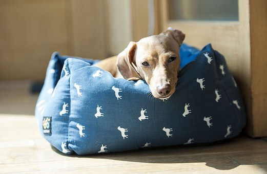 Ponton czyli dobre legowisko dla psa