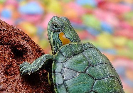 terrarium-dla-zowia-stepowego.jpg